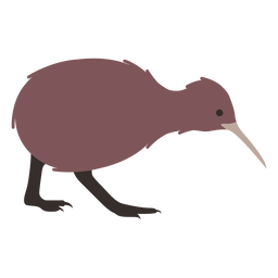 Kiwi bico perna plana