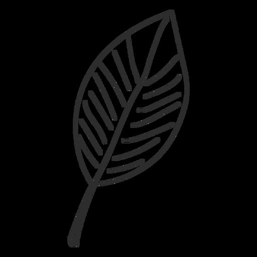 Bosquejo de la hoja Transparent PNG