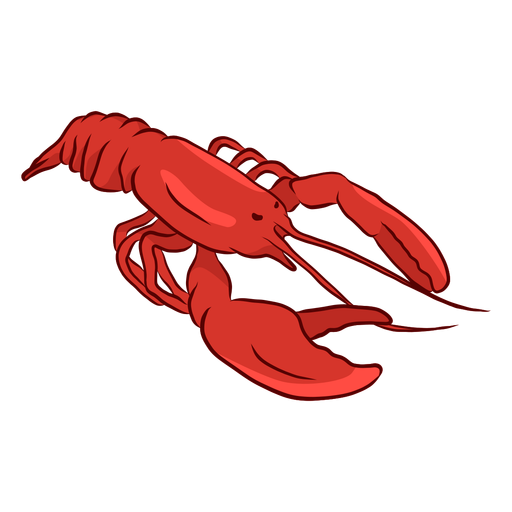 Lobster antenna claw tail illustration  Transparent PNG