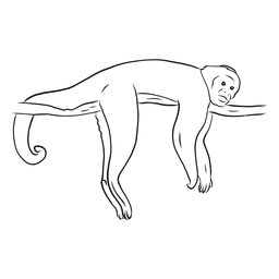 Affe Capuchin Bein Schwanz Zweig Skizze