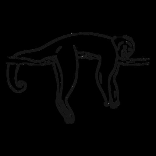 Bosquejo de rama de cola de pierna de capuchino de mono Transparent PNG