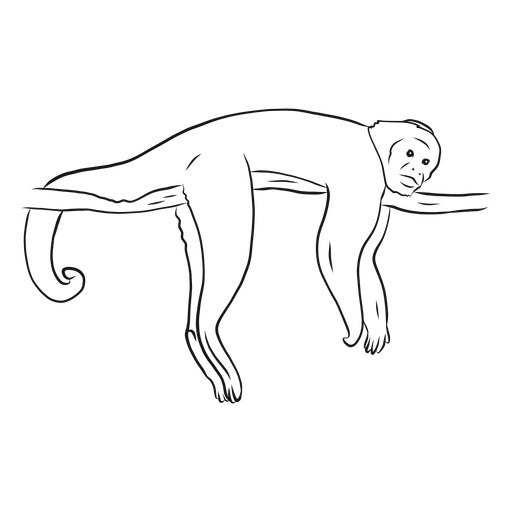 Monkey capuchin leg tail branch sketch Transparent PNG