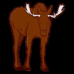 Moose elk antler hoof illustration