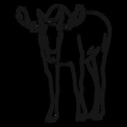 Moose elk antler hoof sketch