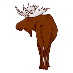 Moose elk antler illustration