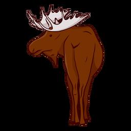Moose elk antler illustration
