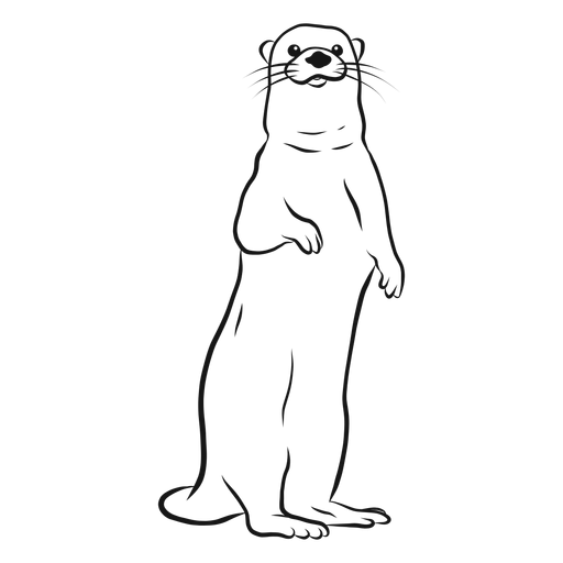Dibujo de pierna de hocico de nutria Transparent PNG