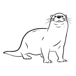 Otter muzzle leg tail whisker sketch