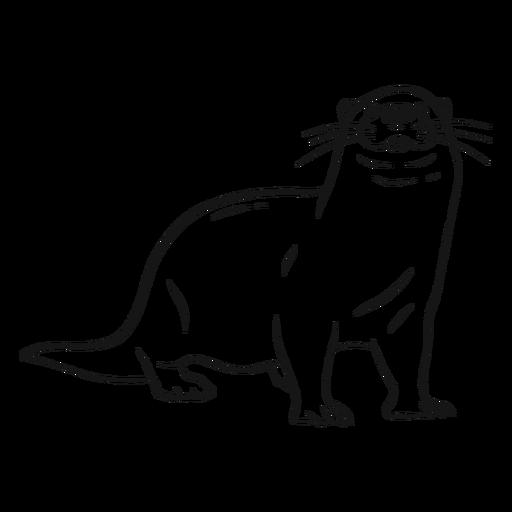 Otter-Mündungsbein-Schwanz-Whiskerskizze Transparent PNG