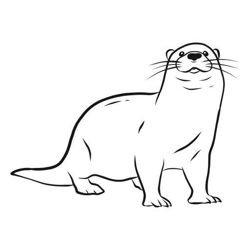 Otter muzzle leg tail whisker sketch Transparent PNG