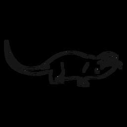 Esboço de focinho de lontra