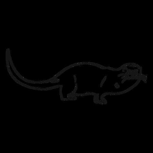Otter muzzle sketch Transparent PNG