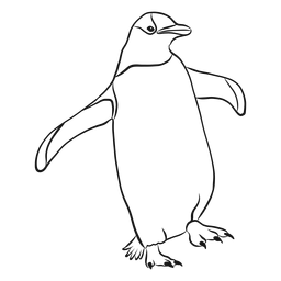 Pinguinflügelschnabelskizze