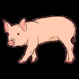 Ilustração de casco de orelha de focinho de porco