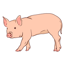 Ilustración de pezuña hocico oreja de cerdo