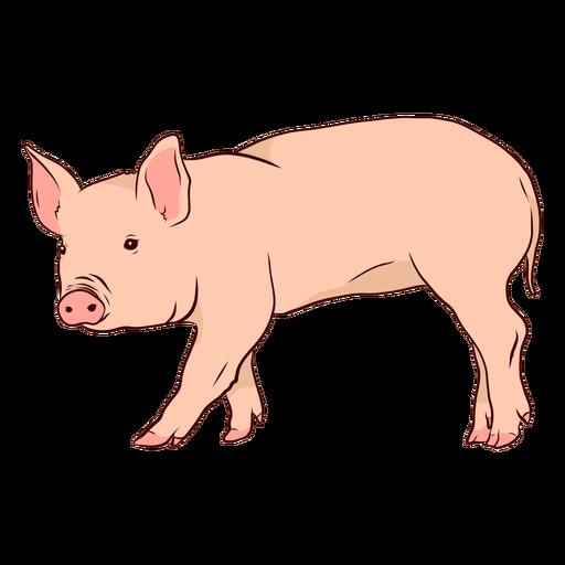 Ilustración de pezuña hocico oreja de cerdo Transparent PNG