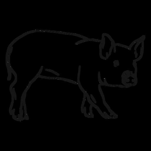 Pig snout ear hoof sketch Transparent PNG