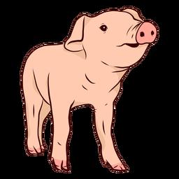 Ilustración de pezuña hocico de cerdo