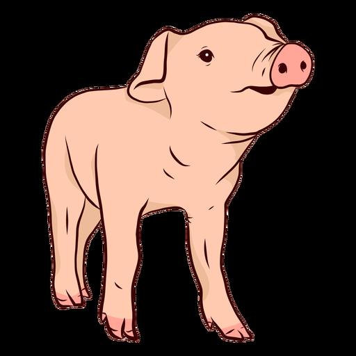 Ilustración de pezuña hocico de cerdo Transparent PNG