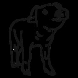 Bosquejo de pezuña de hocico de cerdo