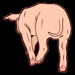 Pig tail hoof illustration