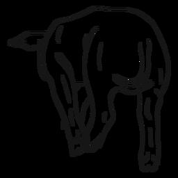 Boceto de pezuña cola de cerdo.