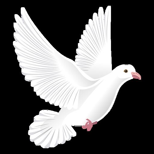 Pigeon wing tail beak illustration