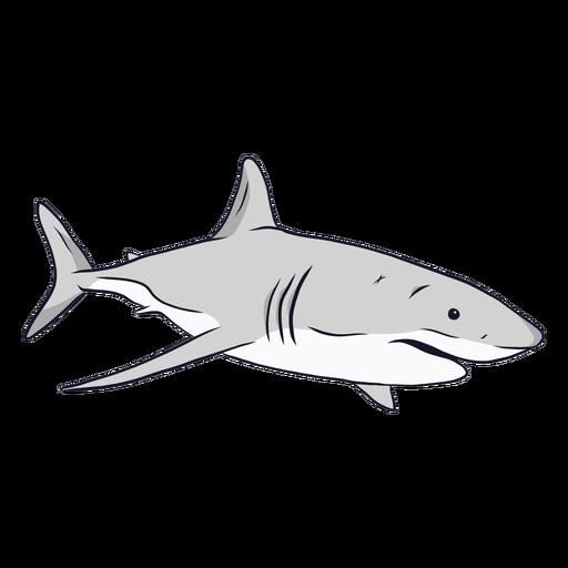 Ilustración de cola de aleta de agallas de tiburón Transparent PNG