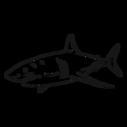 Desenho de rabo de barbatana de guelras de tubarão