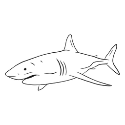 Haifischkiemenflossenschwanzskizze
