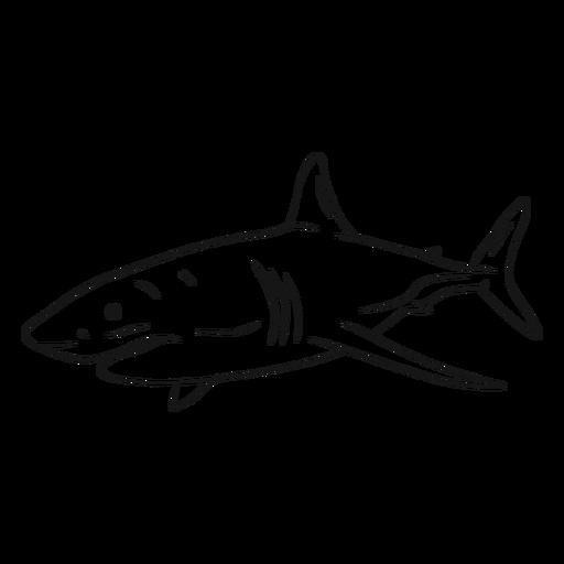 Bosquejo de cola de aleta de agallas de tiburón Transparent PNG