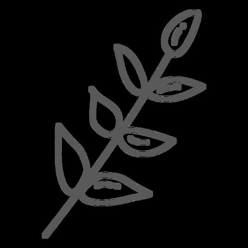 Doodle de folha de caule Transparent PNG