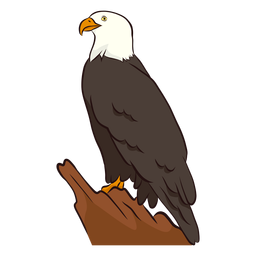 Wing eagle  illustration