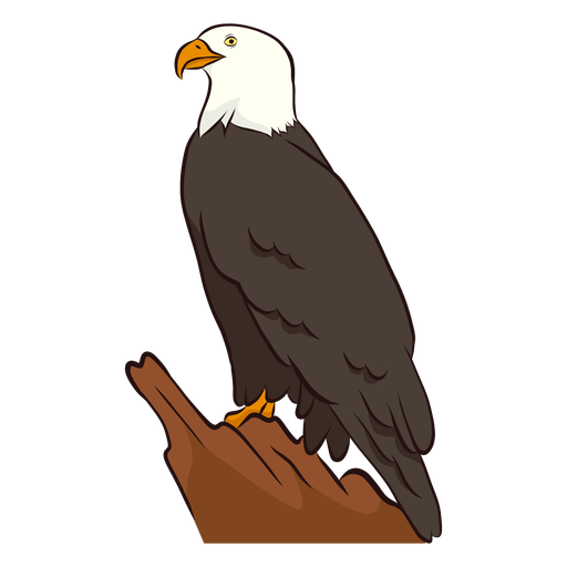 Wing eagle  illustration Transparent PNG