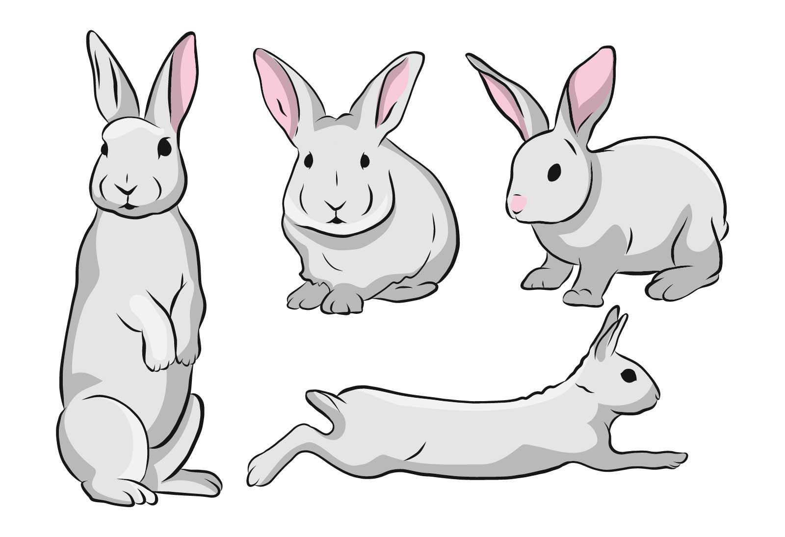 Cute Rabbit Illustration Set