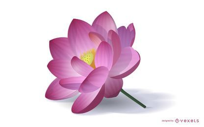 Ilustração realista de flor de lótus