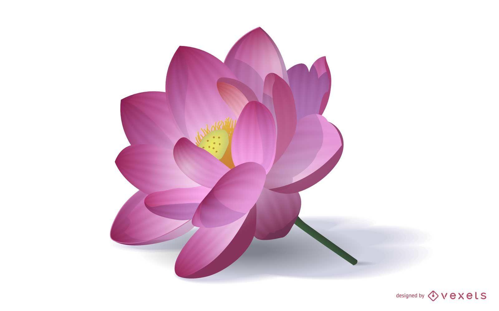Realistic Lotus Flower Illustration Vector Download