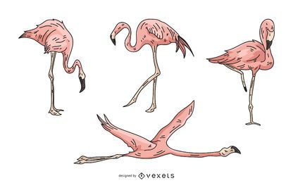Pink Flamingo Illustration Set