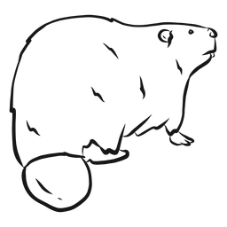 Beaver rodent fur tail sketch