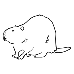 Beaver tail fur tooth rodent sketch