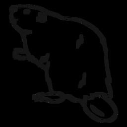 Desenho de pele de roedor com cauda de castor