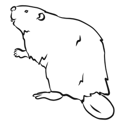 Esboço de pele de roedor de cauda castor