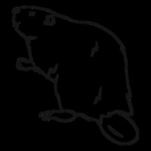Bosquejo de piel de roedor de cola de castor