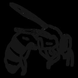 Bosquejo de avispa de ala de raya de abeja
