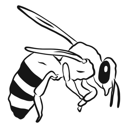 Bee stripe wing wasp sketch Transparent PNG