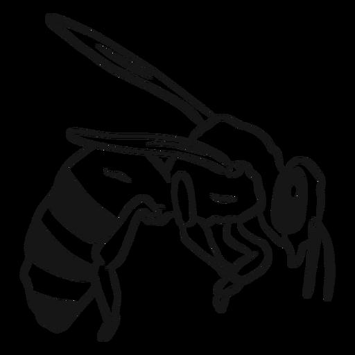 Esboço de vespa de asa de abelha Transparent PNG