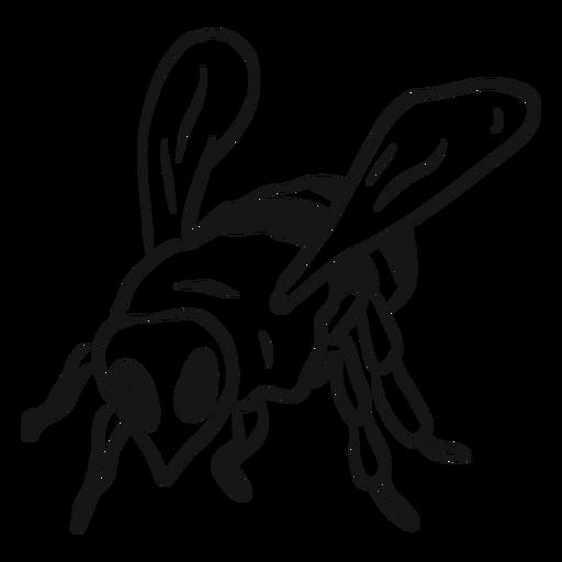 Esboço de listra de asa de abelha de abelha Transparent PNG