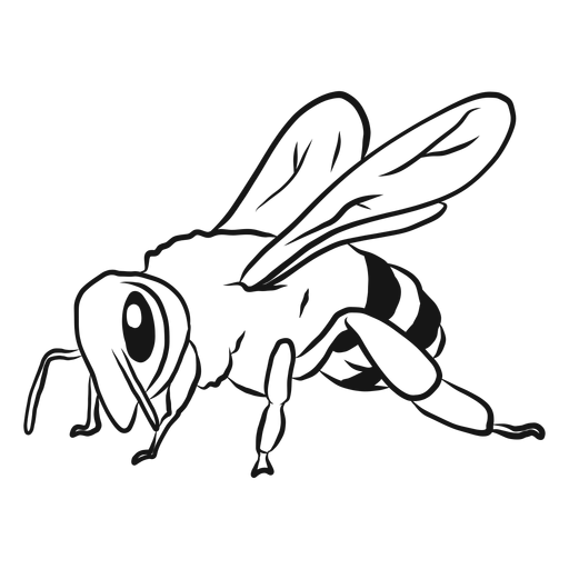 Bee wing stripe wasp sketch Transparent PNG