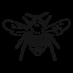 Bosquejo de raya de avispa de ala de abeja