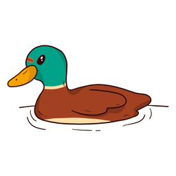 Nettes wildes Entenschnabelwasser der Drake Ente, das flach schwimmt